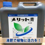 【マンゴー栽培】開花のために『窒素』投入で樹に刺激を与えろ!