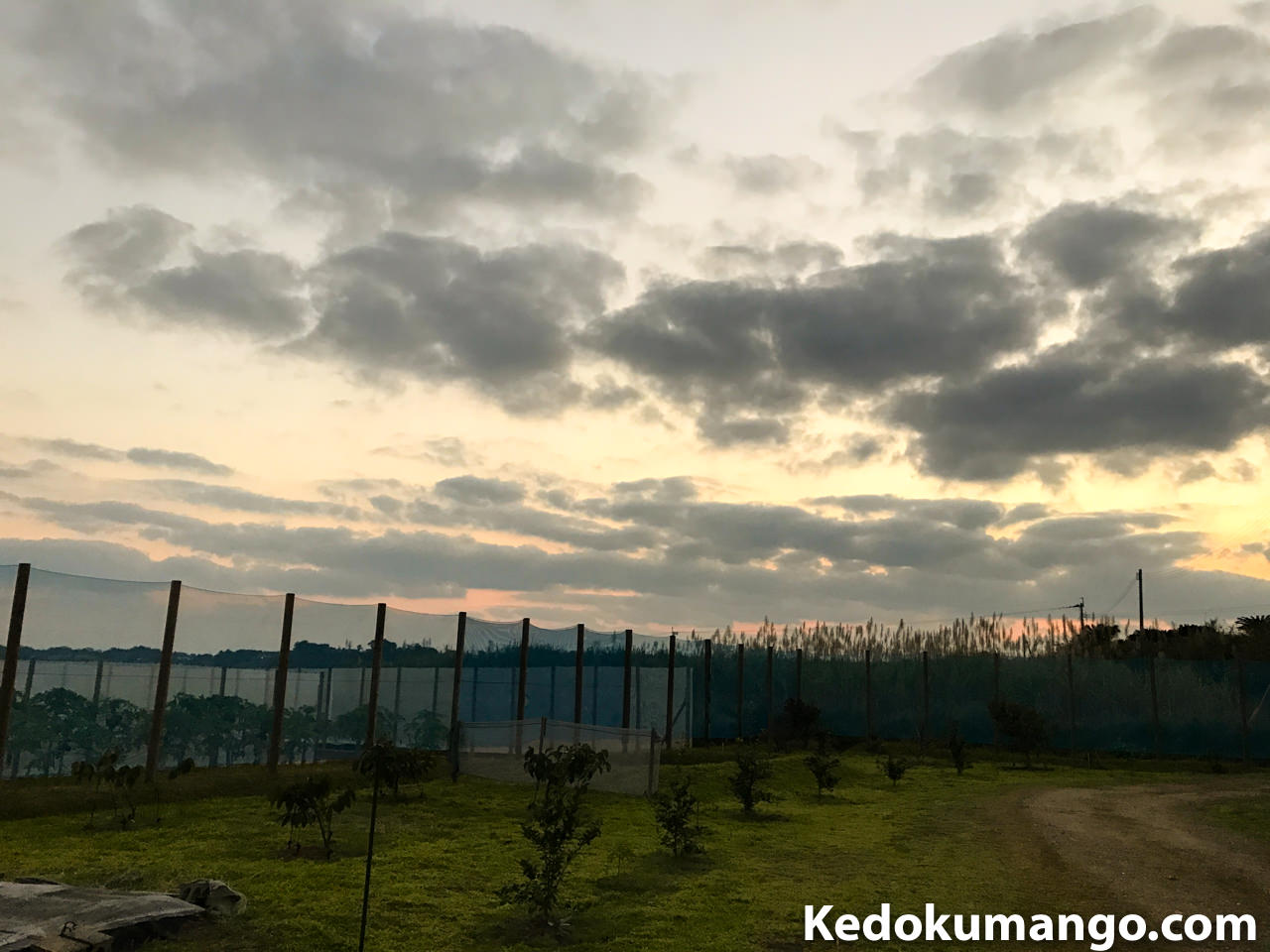 液肥の散布を開始する夜明け前の様子