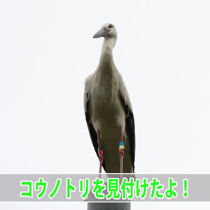 20170223-DSC_6507_ai