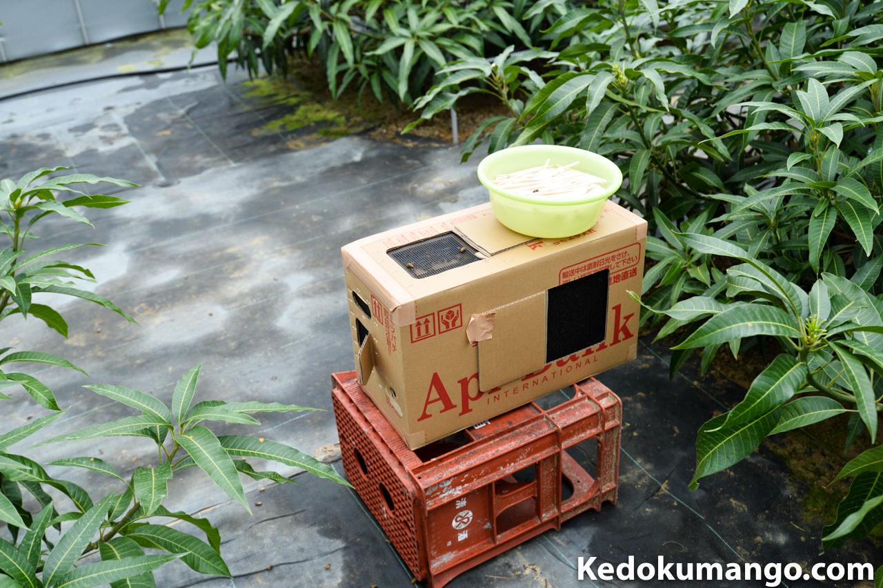 ミツバチの巣箱の設置の様子_2