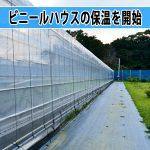 【マンゴー栽培】開花の促進のためにビニールハウスの保温を開始するぞ!
