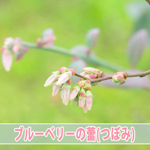 20170314-DSC_7313_ai