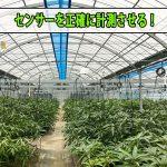 【マンゴー栽培】ビニールハウスの『温度センサー』を正確に作動させろ!