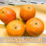 [徳之島産]の美味しい【たんかん】をもっと美味しく食べる料理方法を紹介するよ!