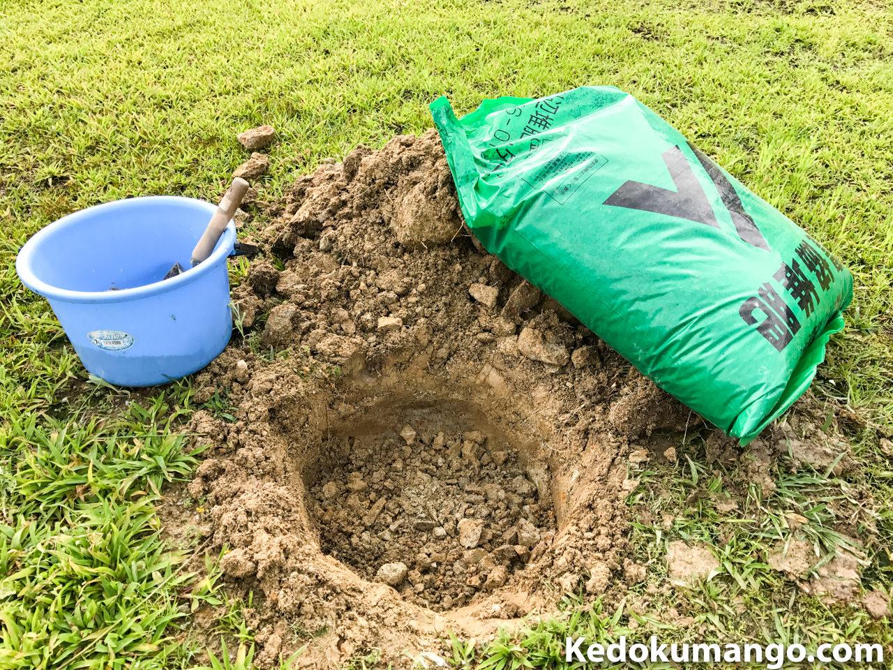 パパイヤを植えるための準備