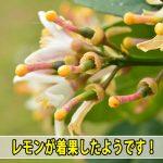 20170329-DSC_7554_ai