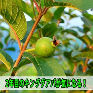 20170412-DSC_7671_ai