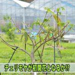 20170416-DSC_7689_ai