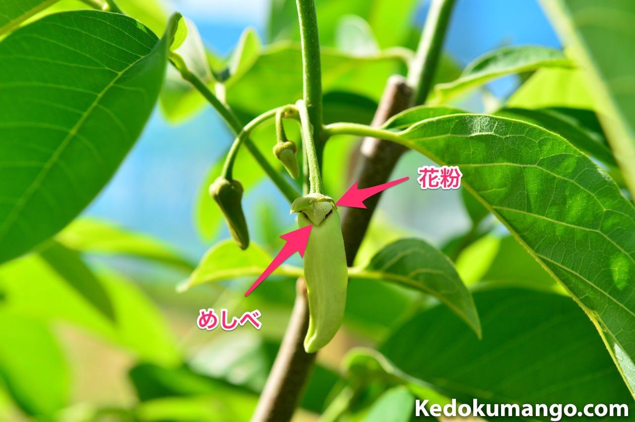 アテモヤの花の構造
