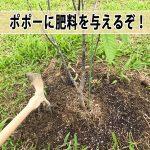 思い通りに成長しない【ポポー】に肥料を与えるぞ!