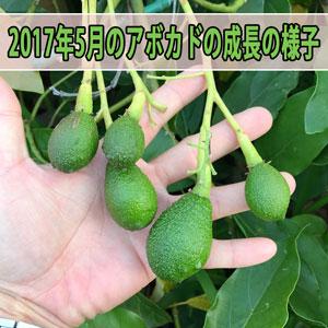 20170523-IMG_0345_ai