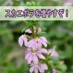 20170603-DSC_8089_ai