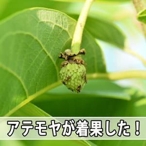 20170603-DSC_8098_ai