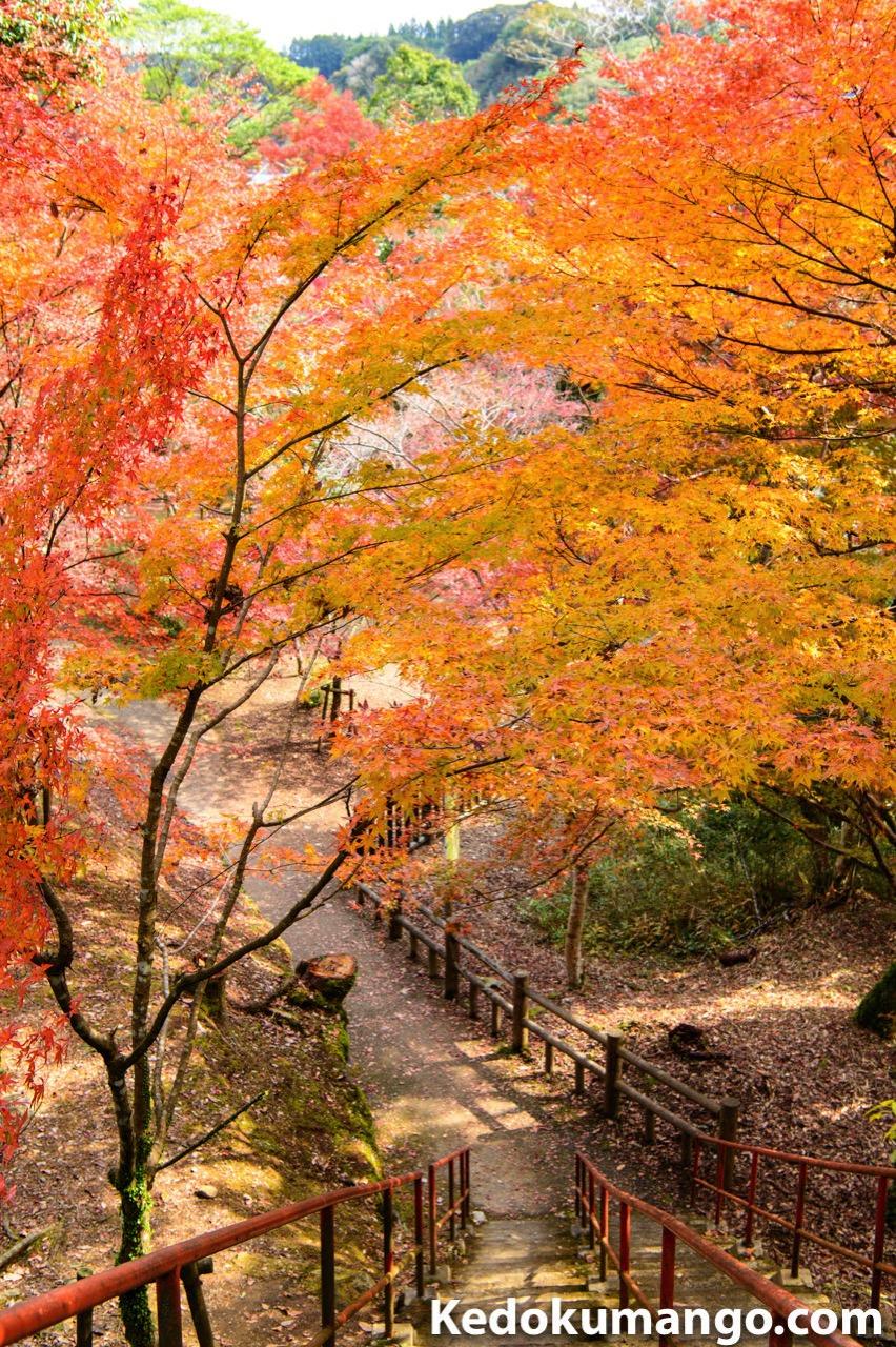 曽木の滝での紅葉
