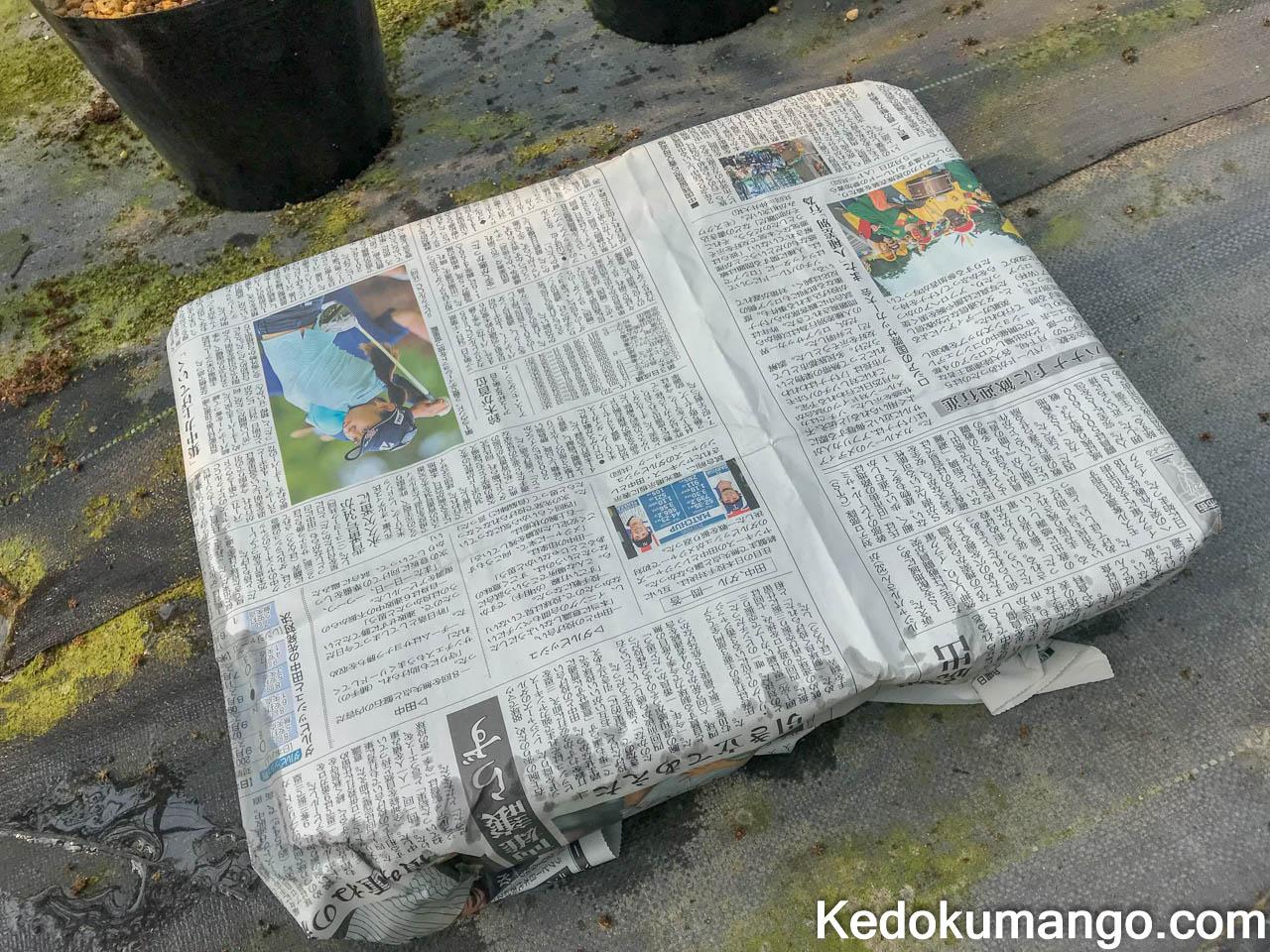 苗床を新聞紙で覆ったところ