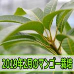 20190204DSC_1686_ai