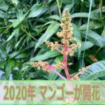 20200309-IMG_4259_ai