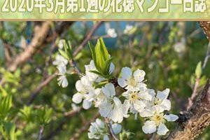 IMG_4235_ai