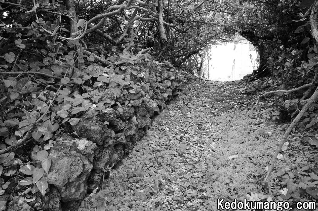 植物で出来たトンネル