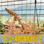 IMG_5035ai_jpg